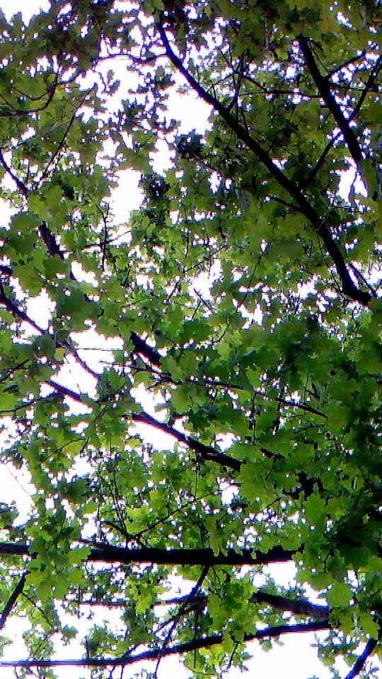 Ein Baum von unten